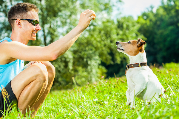 Man training dog with treats by Shutterstock.