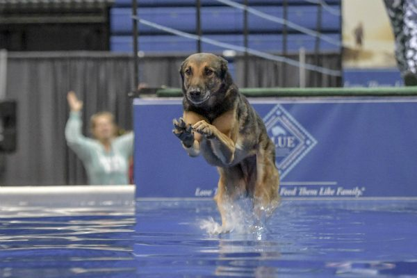 Rex becoming a two-time world champ. (Photo by Kim Nygard, courtesy DockDogs)