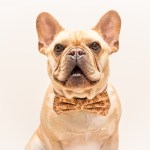 Why You Don T Want Purebred Dogs In Rare Colors