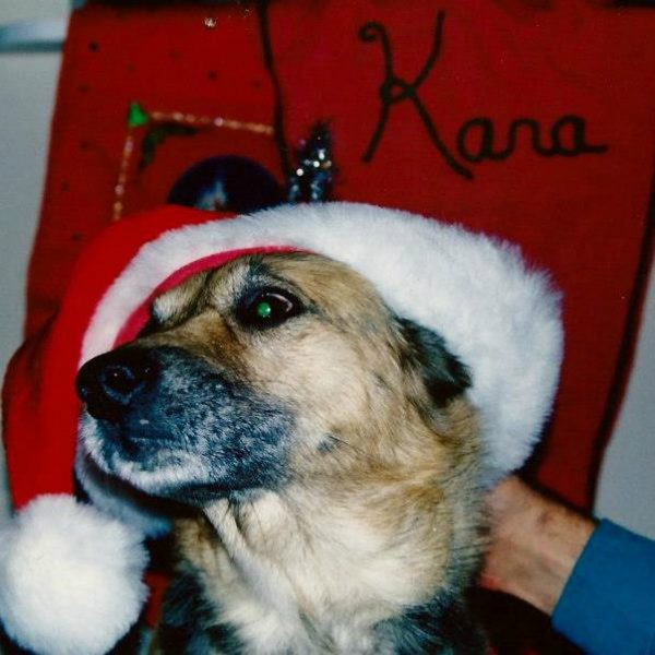 An old photo of our German Shepherd mix, Max. He was filled with gratitude for us saving him from the cold outdoors, but it really was too much, even for him, to wear a Santa hat. (Kara Martinez Bachman)