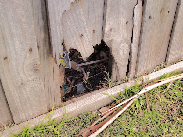 A small dog could escape through the hole in this fence. (Photo by Shutterstock)