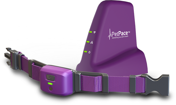 PetPace-Vet-LP-collar-only