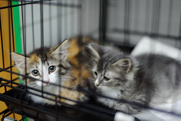 Kittens in an animal shelter by Shutterstock
