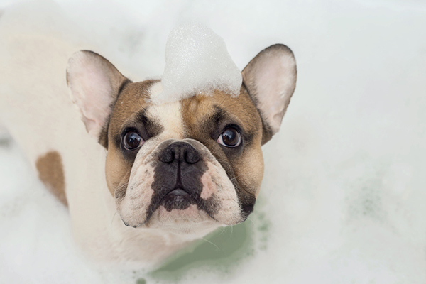 A dog in a bath with bubbles on his head.
