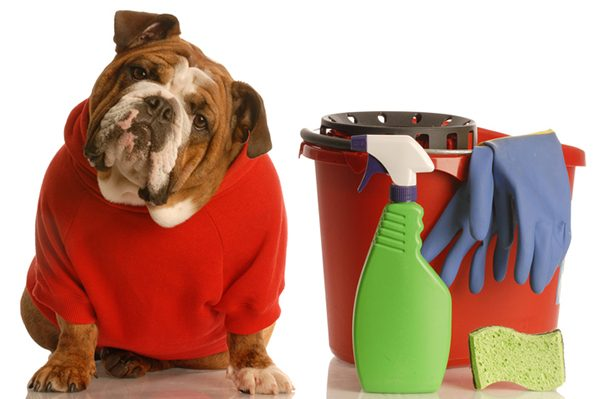 Dog with cleaning supplies.