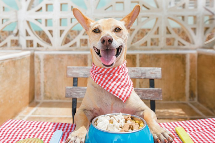 A delicious meal is the key to keep your dog happy
