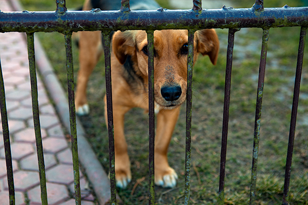 A dog pressing his head up against a fence.