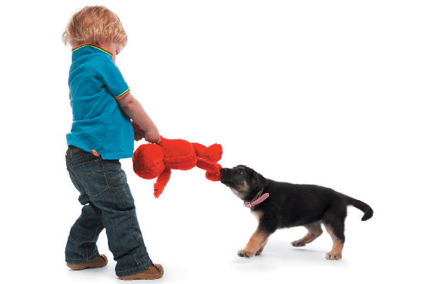 A boy and a dog fighting over a toy.