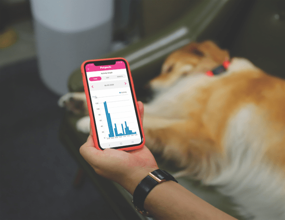 Petpuls.net fitness trackers for dogs