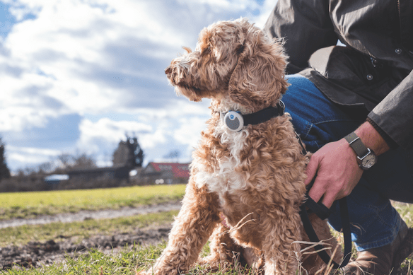 Surepetcare.com fitness trackers for dogs
