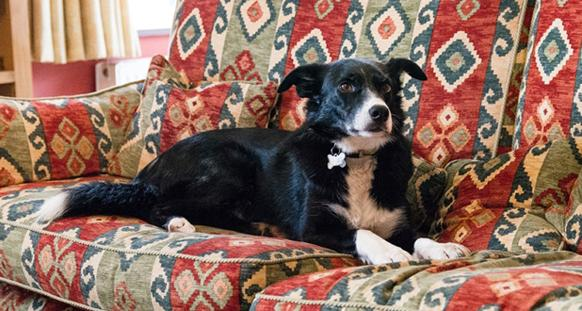 donate sofa to charity air set online dogs trust evesham seeks home old age pooch (oap) in time ...