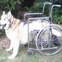 Wheel Chairs For Dogs Kid Desk Chair Dog Wheelchair And Cart Comparisons Choosing A How To Make From Human Big Only
