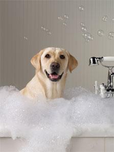 Dog Grooming Spa in Jupiter FL  DogsWorld