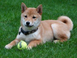 dog-2074370_1280