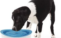fontaine à eau pour chien Dogit