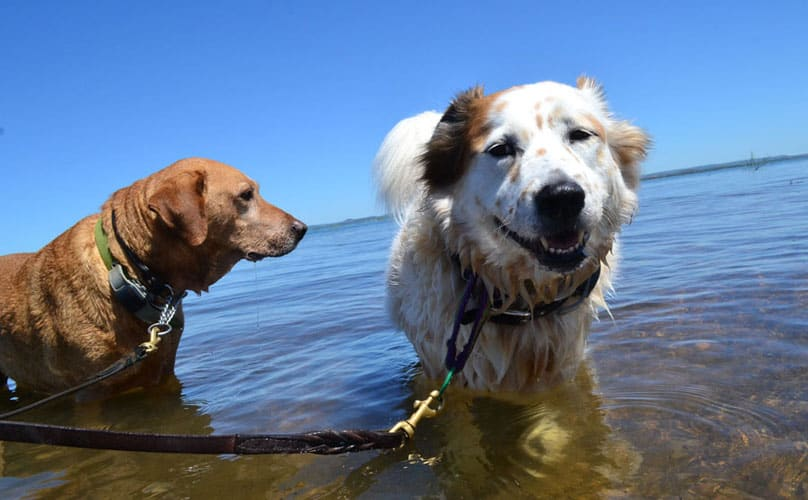 barkpost-featured-lake-beaches