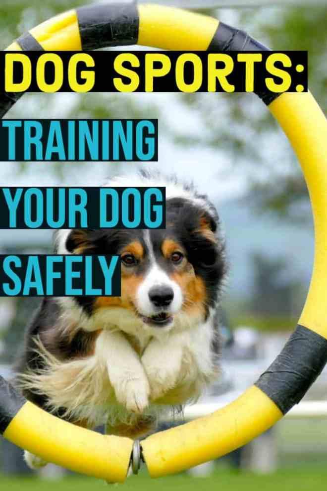 dog sports--training your dog safely