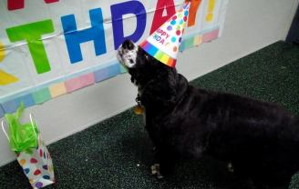 Harley enjoying the birthday festivities