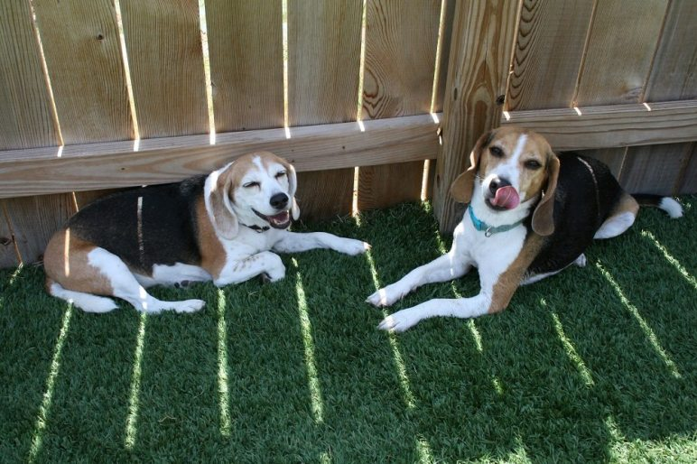 Dogs in shade
