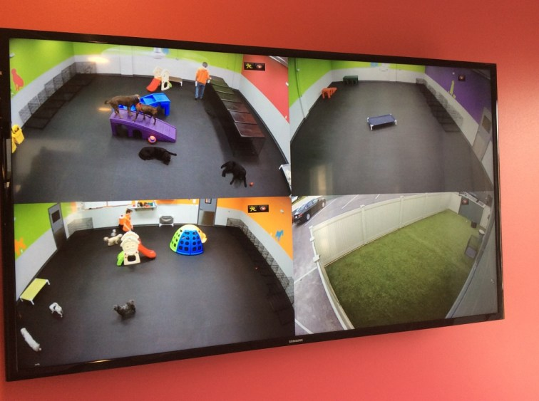 Live video cams at Dogtopia