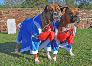 Quinn and Sydney, The Boxers