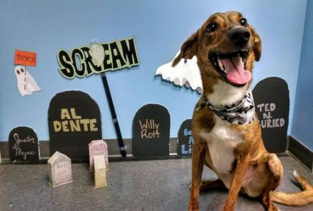 Ghosts Goblins and Ghouls Day during Halloween 2015, Autumn Greyhound mix