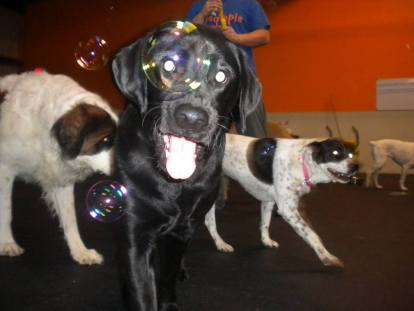 Omega Black Lab playroom photo 2015