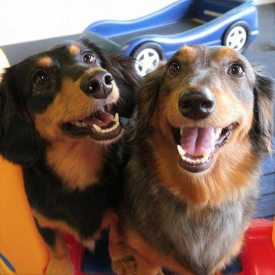 Boarding dogs, Violet and Penny posing for a picture.