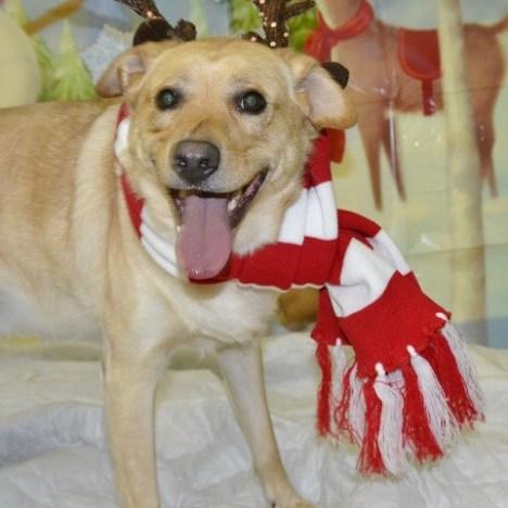Lola, Labrador Mix