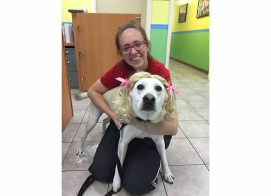 Katie, our Assistant Manager, posing with Goldi-Lahnah, the Yellow Lab. Cute pigtails!