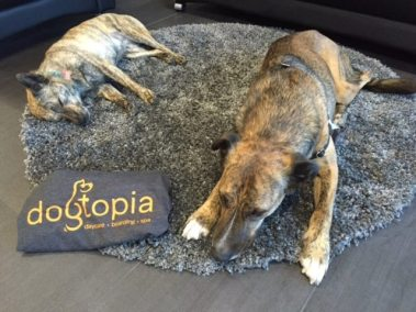 Happy tired pups after a day at Dogtopia!