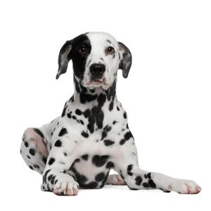 Dog sit
