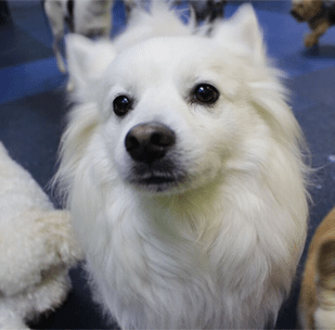 Dogtopia Meet and Greet