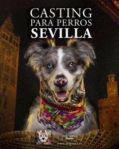 Casting para Perros en Sevilla