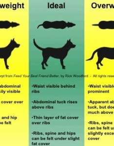 Fat skinny and perfect dog weight also how to determine ideal in  thin obese rh dogtraining
