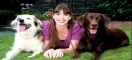Dog training behavior problems