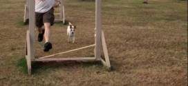cd & daddy agility training