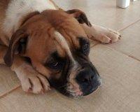 Dog Apartment Hacks: Make Your Place Pet-Friendly! - Dog ...
