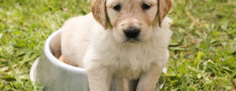 how to stop puppy accidents
