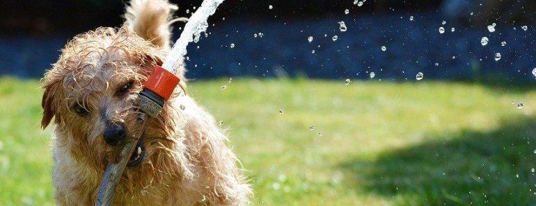 dog summer threats
