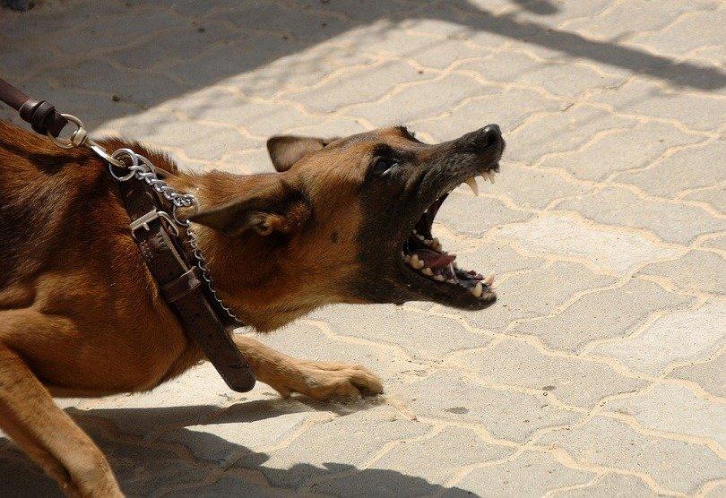 7 Ways to Stop Dog Barking