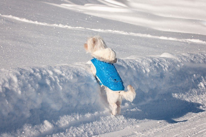 best winter dog jacket