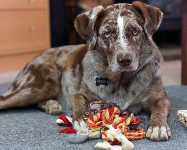 Best DIY dog toys