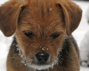 too cold for puppies