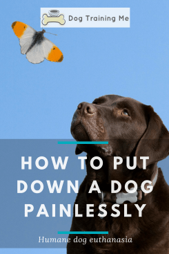 how to put down a dog painlessly