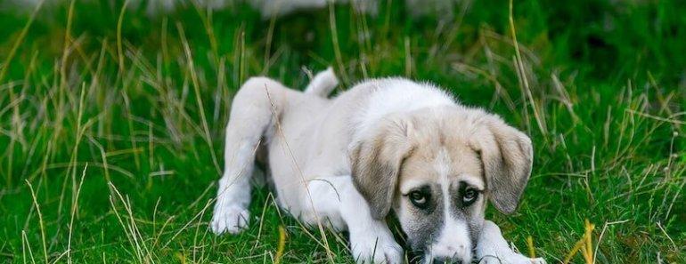 giving dog medicine