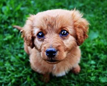 should I get a dog