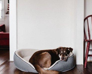 calm a dog after seizure