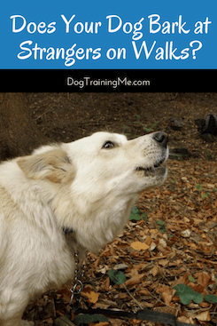 dog barks at strangers on walks