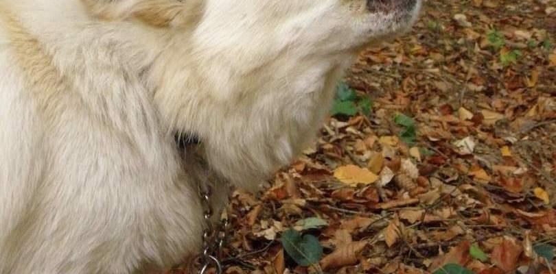 dog barks at strangers